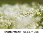 Background With White Flowery...