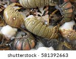 lobster and langoustine exposed ... | Shutterstock . vector #581392663