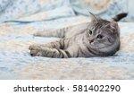 Stock photo grey cat lying on bed tired kitten over blur background dreaming cat kitten cat 581402290