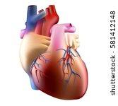 anatomy of human heart soft... | Shutterstock . vector #581412148