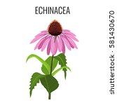 Echinacea Ayurvedic Herbaceous...