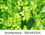 Leaves Of Fresh Green. Leaves...