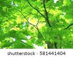 leaves of fresh green. leaves... | Shutterstock . vector #581441404