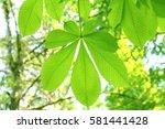 leaves of fresh green. leaves... | Shutterstock . vector #581441428
