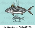 Roosterfish. Vector...