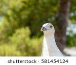 Funny White Seagull Bird...