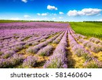 fields of lavender and... | Shutterstock . vector #581460604