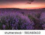 violet lavender field at dusk | Shutterstock . vector #581460610