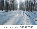 pathway in the forest with... | Shutterstock . vector #581522038