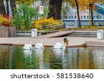 White Swans In The Water Of An...