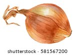 yellow onion. watercolor... | Shutterstock . vector #581567200