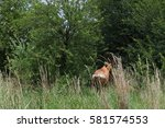 Red Hartebeest Disappearing...