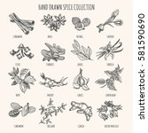 vector hand drawn herbs ... | Shutterstock .eps vector #581590690