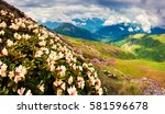 blooming white rhododendron...   Shutterstock . vector #581596678