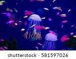 Underwater World Fish Aquarium