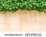 Fresh Green Ivy Leaves Plant...