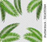 Palm Leaf Vector Illustration...