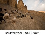 A herd of miniature goats native to northern India's elevated climates. - stock photo