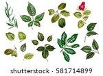 green watercolor leaves. linden ... | Shutterstock . vector #581714899