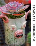 Small photo of This cute clay planter with this gorgeous succulent plant is called Echevaria Afterglow of the Crassulaceae family otherwise known as Stonecrops, a striking dessert plant.