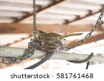 Bird Nest On Chains And Iron...