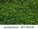 Lush Foliage Tiny