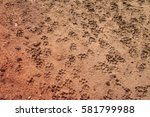 tiger or cat foot step on mud | Shutterstock . vector #581799988