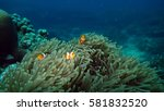 Group Of Clown Fish Name...