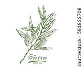 tee tree. vector hand drawn... | Shutterstock .eps vector #581833708