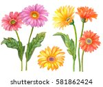 Watercolor Set Of Flowers  Han...