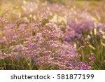 wild pink flowers and sun light | Shutterstock . vector #581877199