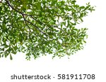 green leaves isolated on white... | Shutterstock . vector #581911708