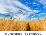 View Of Wheat Ears And Cloudy...