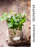 branches of mint in a glass on ... | Shutterstock . vector #581965918