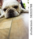 French Bulldog Dog Lying On Th...