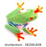 red eyed tree frog from the...   Shutterstock . vector #582081838