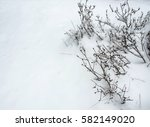 Frost Snow Covered Bush Stem O...
