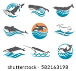 collection of various whales...   Shutterstock .eps vector #582163198