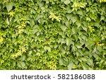vine texture | Shutterstock . vector #582186088