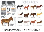 donkey breeds infographic... | Shutterstock .eps vector #582188860