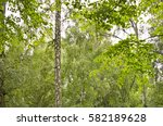 green foliage | Shutterstock . vector #582189628