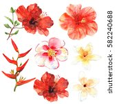 floral set. collection with... | Shutterstock . vector #582240688
