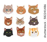 different breed cat's faces.... | Shutterstock . vector #582241486
