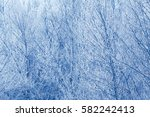 icy branches   frost on trees   ... | Shutterstock . vector #582242413