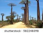 avenue of the baobabs in... | Shutterstock . vector #582248398