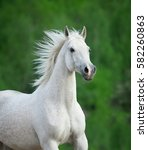Stock photo white beautiful horse portrait on green background 582260863