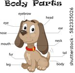 dog body parts. animal anatomy... | Shutterstock .eps vector #582335026
