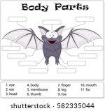 bat body parts. animal anatomy...   Shutterstock .eps vector #582335044