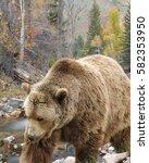 Small photo of BEAR/FALL BEAR/BEAR IN FALL