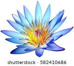 Blooming Blue Lotus Flower...